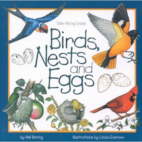 Birds-Nests-and-Eggs
